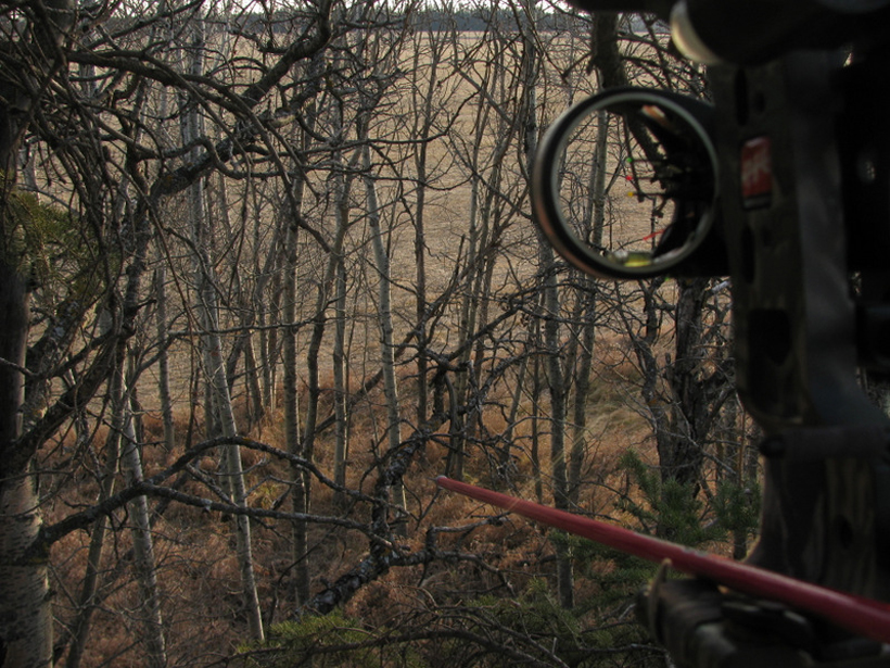 Waiting for the buck