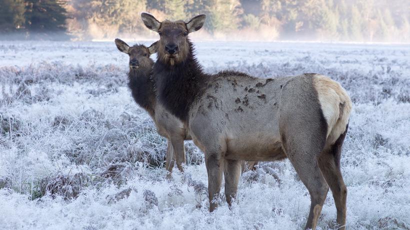 Colorado seeks information about elk poachers