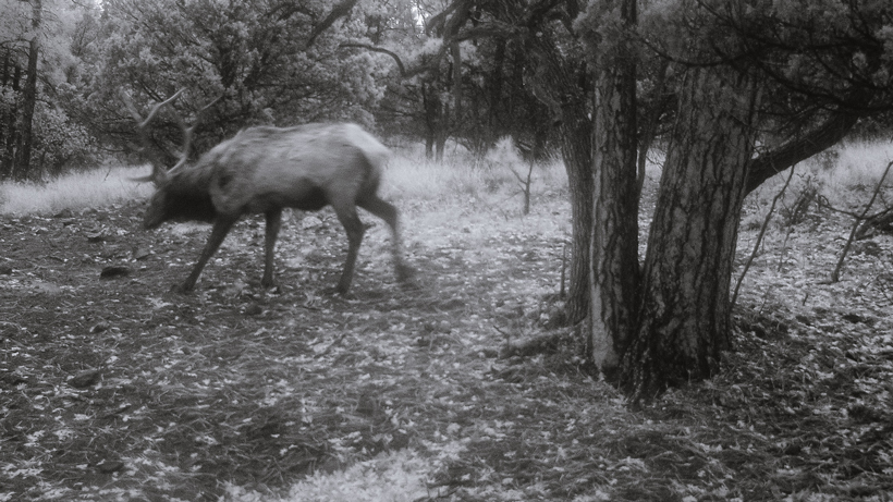 Positives of trail cameras