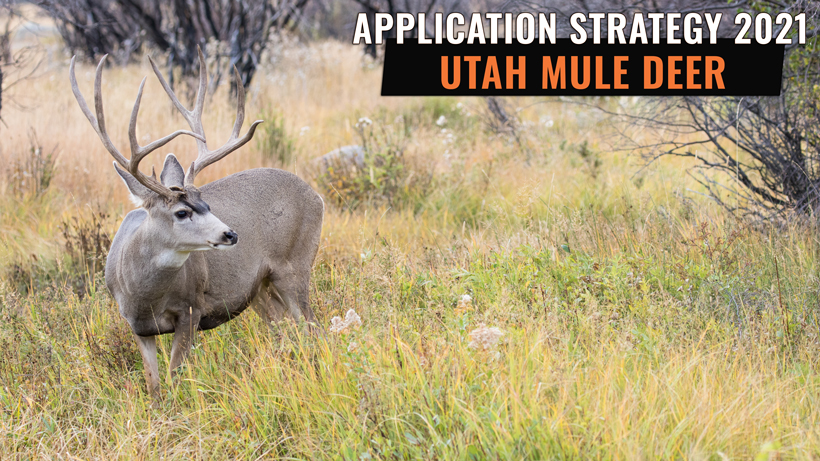 Application strategy 2021: Utah mule deer