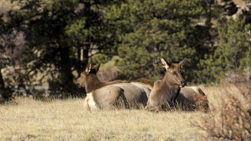 70 volunteers bring water to tule elk