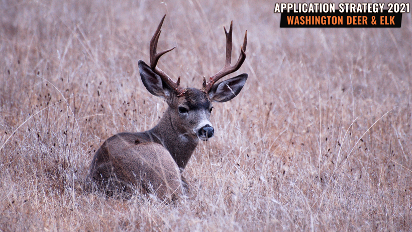 Application Strategy 2021: Washington Deer and Elk