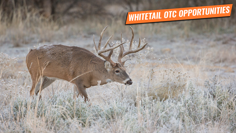 The top opportunities for whitetail deer in the West