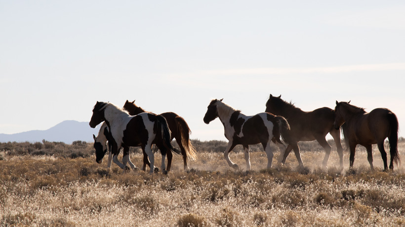 BLM completes wild horse round-up