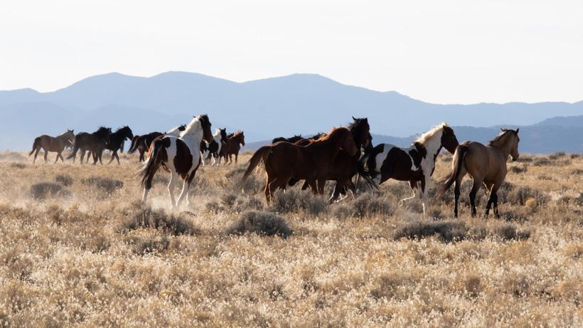 Wild horse round-up begins Oct. 7 in Wyoming