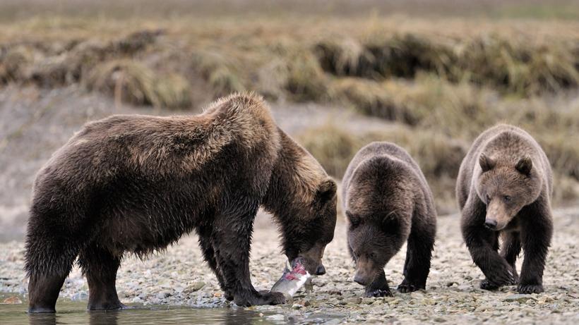 Woman jailed for harassing grizzly bear in Yellowstone