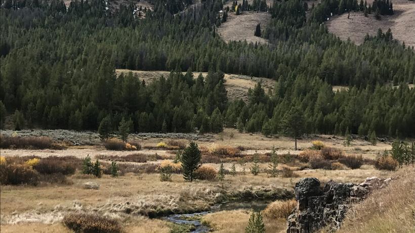 Meadow where the elk were feeding