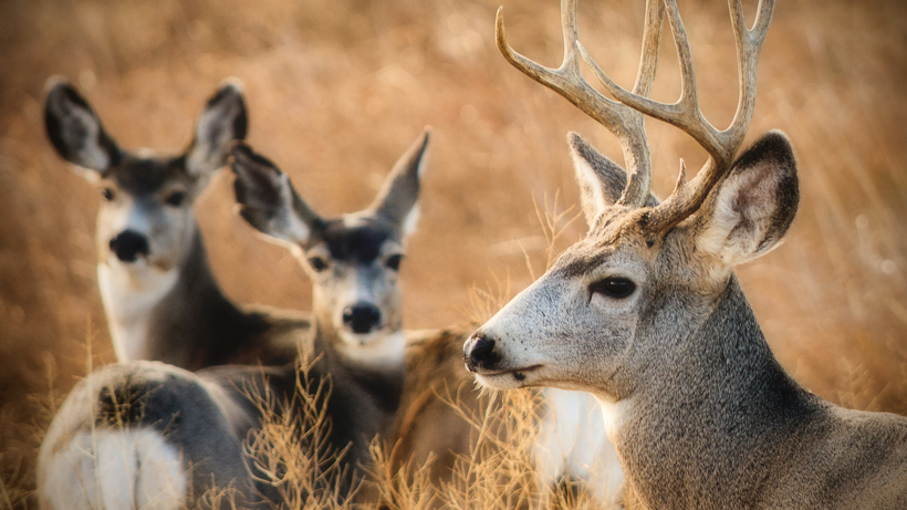 CWD found in new Wyoming deer hunt area
