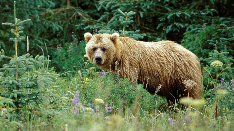 First grizzly bear spotted in 2021