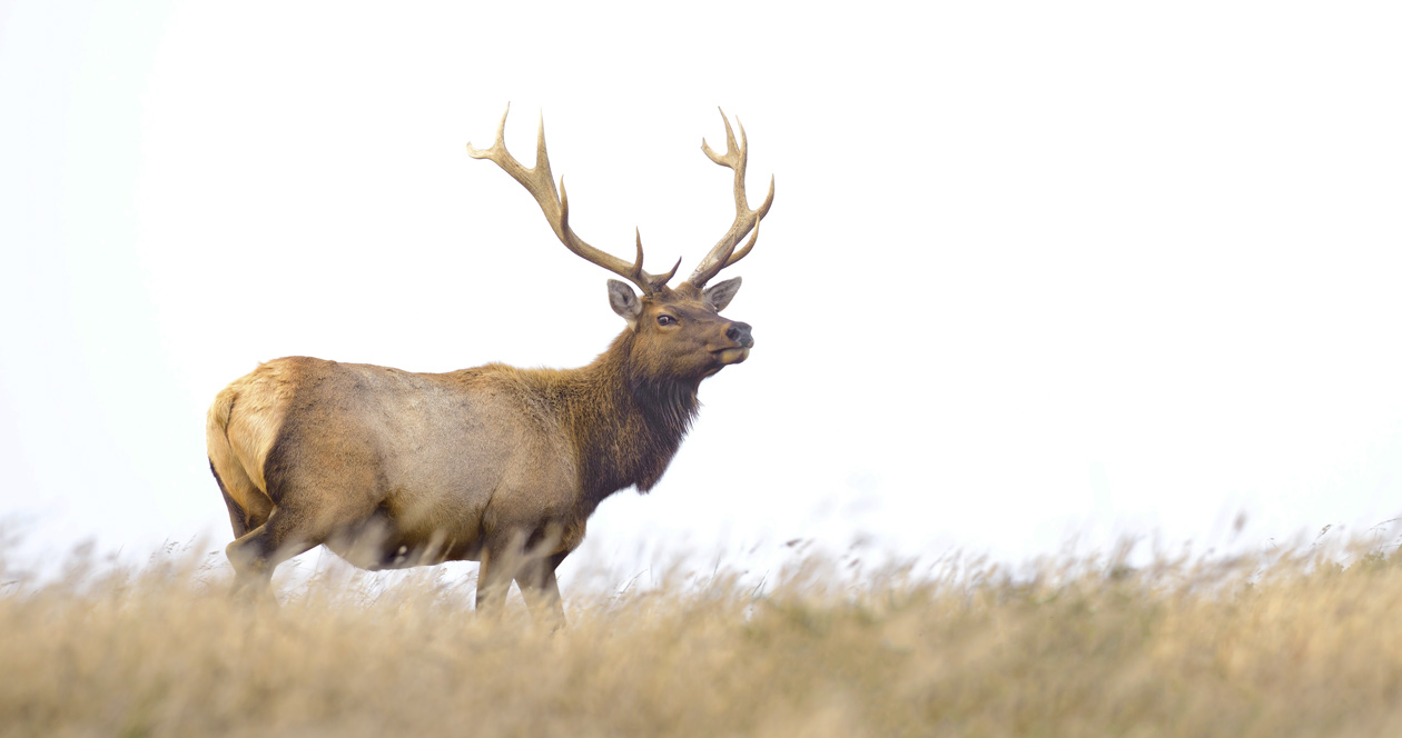 Montana man charged with poaching multiple animals