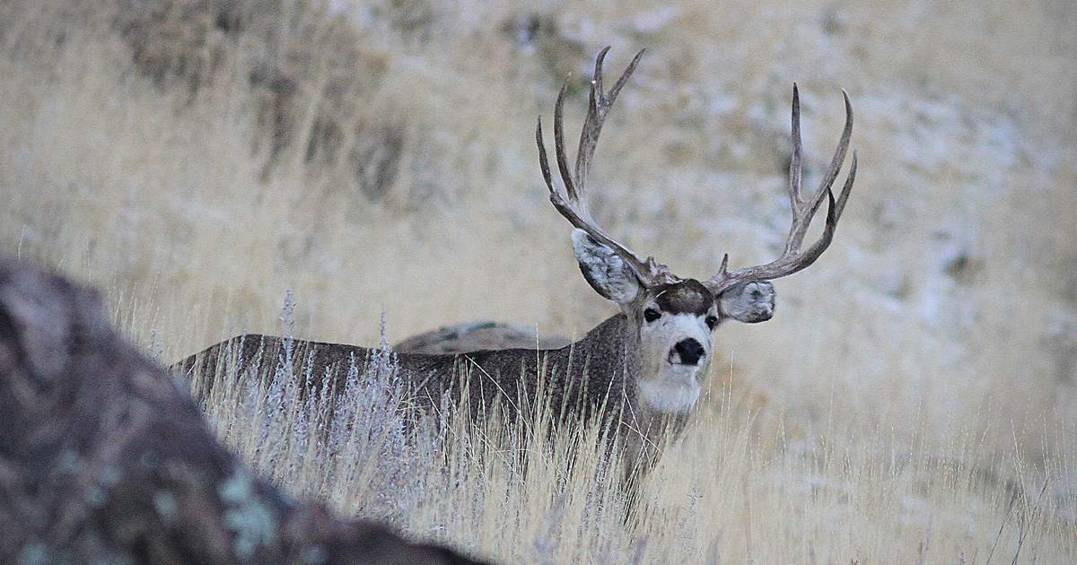 Montana approves 2018-2019 hunting regulations | goHUNT