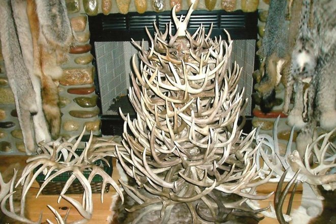 Photo credit: Greenwoodtradition.com - The 20 Best Shed Antler Christmas Trees GoHUNT