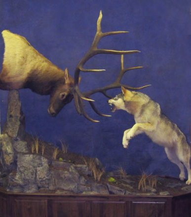 Image result for elk mounts