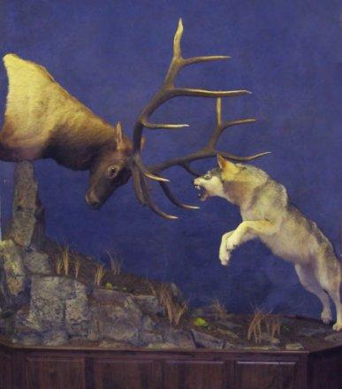 Image result for elk mounts