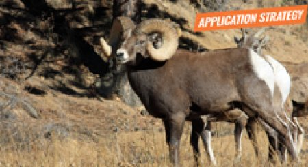 APPLICATION STRATEGY 2018: Montana Sheep, Moose, Goat, Bison
