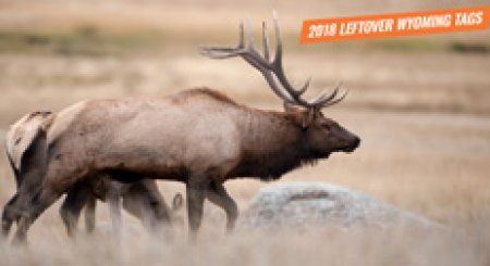 Potential new world record typical mule deer gohunt for Wyoming fishing license