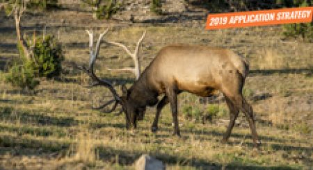 APPLICATION STRATEGY 2019: Arizona Elk