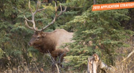 APPLICATION STRATEGY 2019: Colorado Elk and Antelope