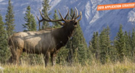 APPLICATION STRATEGY 2019: Idaho Elk