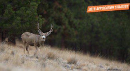 APPLICATION STRATEGY 2019: Montana Deer