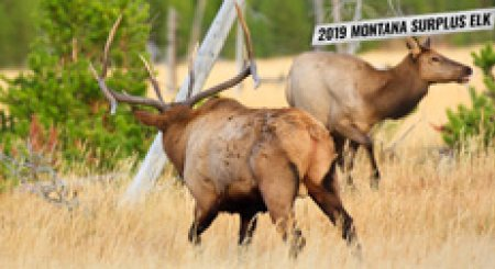 2019 Montana nonresident surplus elk licenses available May 6
