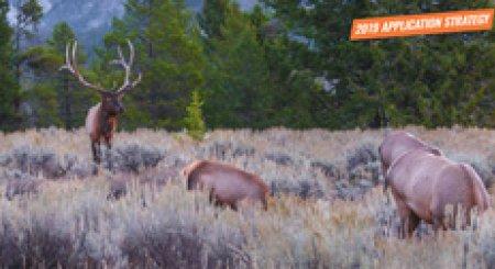 APPLICATION STRATEGY 2019: Wyoming Elk
