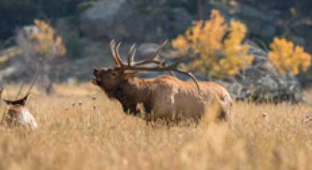 Idaho 2nd controlled hunt draw period now open