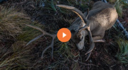 A look at how Brady Miller e-scouts for mule deer