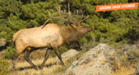 ALERT: 2019 Arizona elk and antelope draw deadline extended!