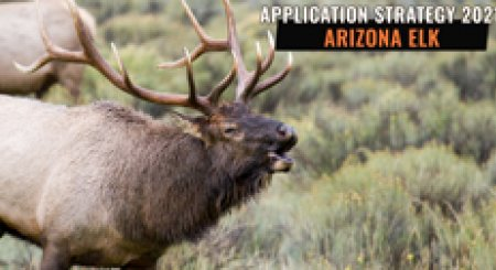 APPLICATION STRATEGY 2021: Arizona Elk