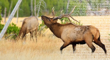 The cost to apply for hunting tags in every western state