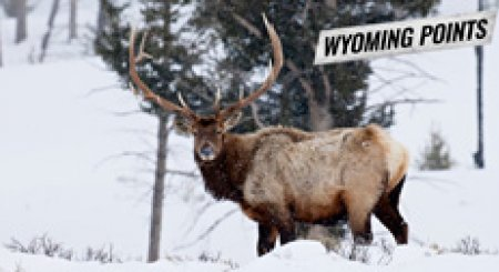 ALERT: Wyoming 2018 Preference Point Deadline Approaching