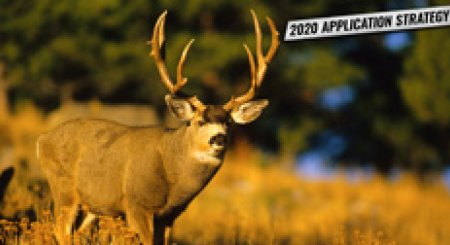 APPLICATION STRATEGY 2020: Montana Deer