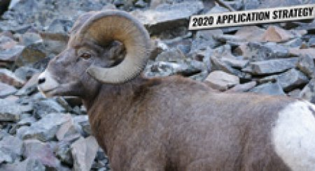APPLICATION STRATEGY 2020: Montana Sheep, Moose, Goat, Bison