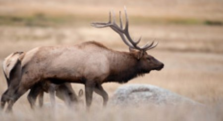 More returned Idaho nonresident deer and elk tags to go on sale August 13