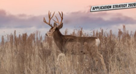 APPLICATION STRATEGY 2020: Utah Mule Deer