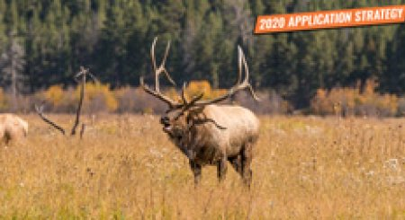 APPLICATION STRATEGY 2020: Utah Elk and Antelope