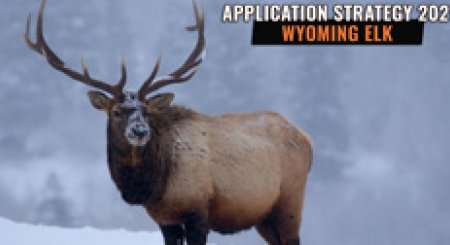 APPLICATION STRATEGY 2021: Wyoming Elk
