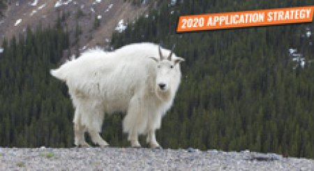 APPLICATION STRATEGY 2020: Idaho moose, bighorn sheep, and mountain goat
