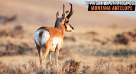APPLICATION STRATEGY 2021: Montana Antelope