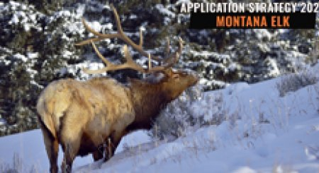 APPLICATION STRATEGY 2021: Montana Elk