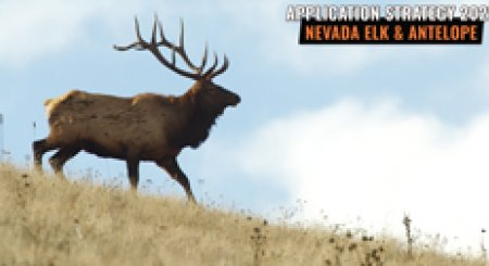APPLICATION STRATEGY 2021: Nevada Elk & Antelope
