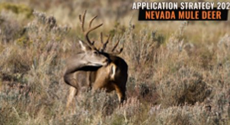 APPLICATION STRATEGY 2021: Nevada Mule Deer