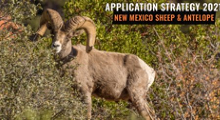 APPLICATION STRATEGY 2021: New Mexico Sheep & Antelope