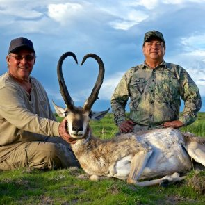 Auction tags: New Mexico antelope