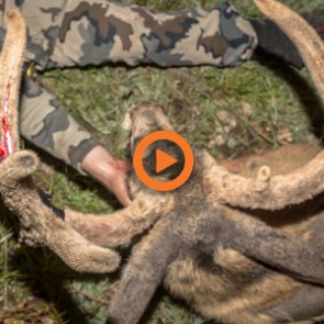 Nevada Deer and Elk Application Strategy — Q&A Video