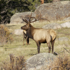 APPLICATION STRATEGY 2015: New Mexico deer, elk, antelope