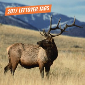 2017 Montana leftover elk combo licenses now available