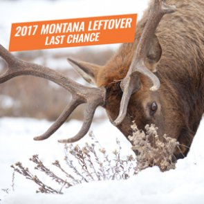 Urgent: Surplus Montana Nonresident Big Game and Elk Combo licenses now available