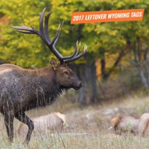 2017 Wyoming leftover license draw now available